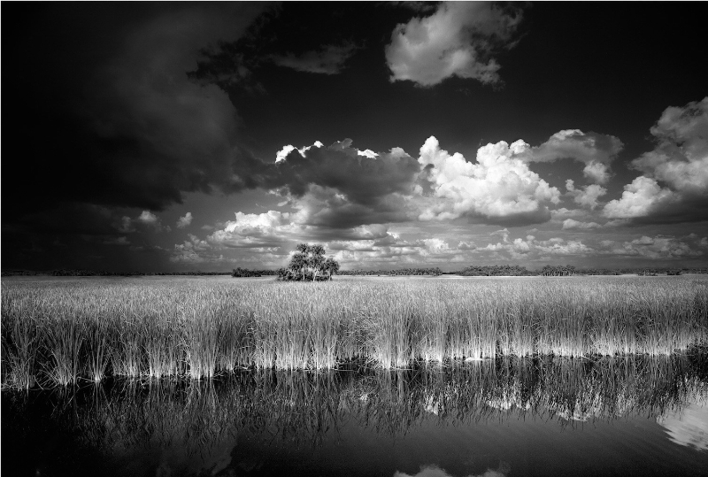 Location: Big Cypress National Preserve, Florida. This photograph was taken on the side of the road and was one of the first black and white photographs Butcher took that encouraged him to change from color photography to black and white film. www.clydebutcher.com (PRNewsFoto/Clyde Butcher Photography)